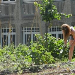 Les 4 et 5 mai, fêtons l'agriculture urbaine !
